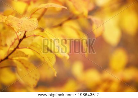 Autumn Golf Leaves with Beautiful Nature Bokeh Background