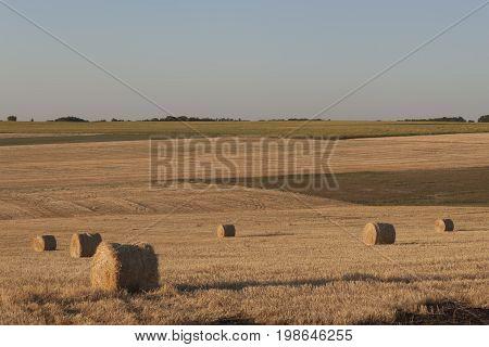 Several Bales Of Hay