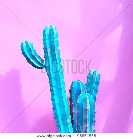 Cactus Fashion Set. Art gallery Design. Minimal Stillife. Vanilla Trendy Pastel Colors. Sweet Summer fashion Style. Blue Neon Cactus Mood. Creative Unusual. Surrealism pink background