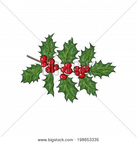Mistletoe branch, twig with green leaves and red berries, Christmas decoration element, sketch vector illustration on white background. Mistletoe branch with leaves and berries, Xmas decoration