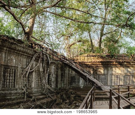 Prasat Beng Mealea in Angkor Complex, Siem Reap, Cambodia. It is largely unrestored old trees and brush growing amidst towers and many of its stones lying in great heaps. Ancient Khmer architecture.