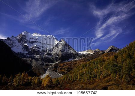 Shangri La, A Panorama View Of Holy Snow-clad Mountain Chenrezig And Yellow Orange Colored Autumn Tr