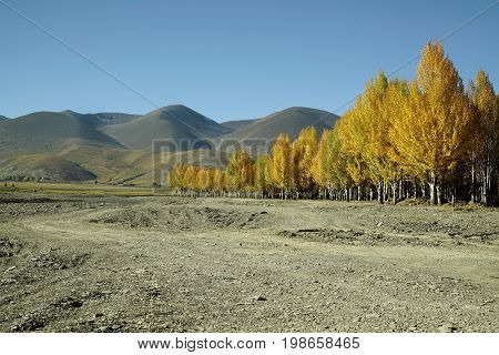 Border Of Yellow Orange Colored Autumn Trees In The Valley With Hills At The Background  And A Dirt