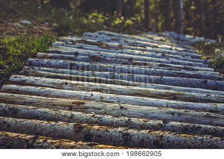 Wooden Mountain Bike Trail Or Footpath