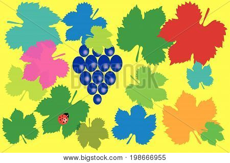 Vector illustration with scene of blue grape and  ladybug on background grape sheet