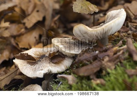 Closeup of a fungus during autumn, mushroom in the forest