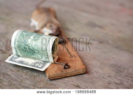 A dollar bill and a mose trapped shallow depth of field shot concept of risks in business