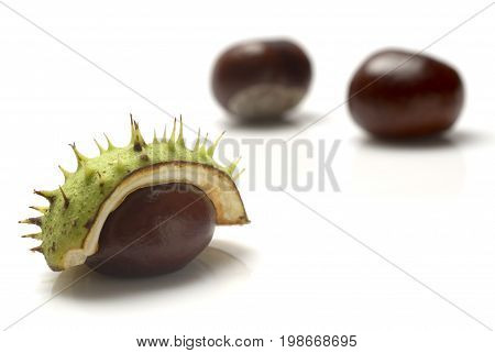 A close up of the horse chestnuts