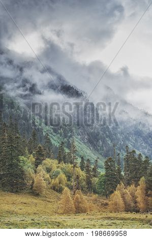 Gloomy Landscape With Mountains In Clouds And Forest