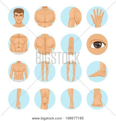 Vector human. Different parts of man body. Set of human leg and hand, head and foot illustration