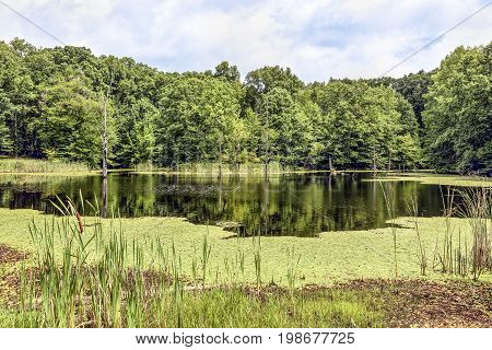 Aspen Pond near North Vernon Indiana is surrounded by summer's greenery.