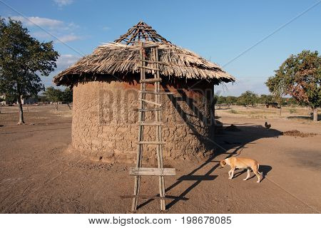 Traditional round hut village residents in Botswana. House of clay with a thatched roof and a ladder in the village. Africa