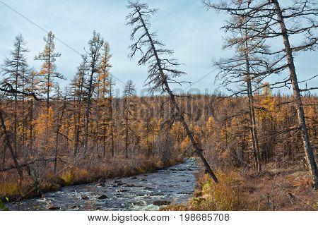 Stream in the autumn the Siberian taiga. Evenkiya Krasnoyarsk region Russia