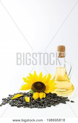 Sunflower and sunflower oil with seeds on white background