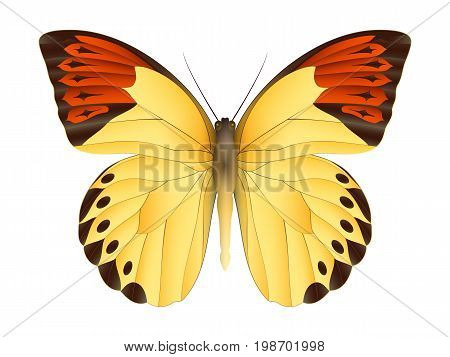 Beautiful butterfly isolated on a white background. Great orange tip glaucippe butterfly. 3D illustration