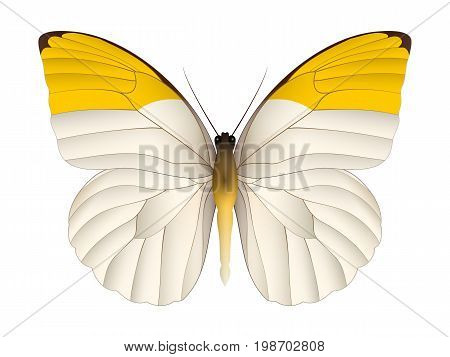 Beautiful butterfly isolated on a white background. Pieridae grand butterfly. 3D illustration