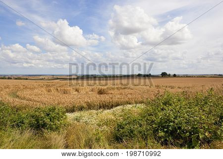 Scenic Wheat Field And Wildflowers