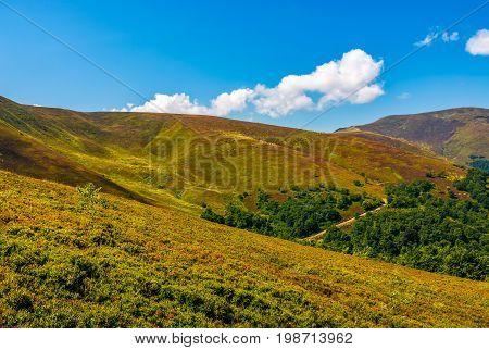 Path Through Forest On Mountain Hillside