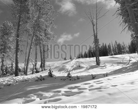 B&W Winter Landscape