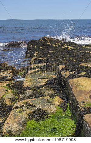 Waves Crashing On Rocks With Kelp