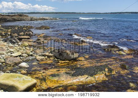 Colorful Coastline Scene - Acadia