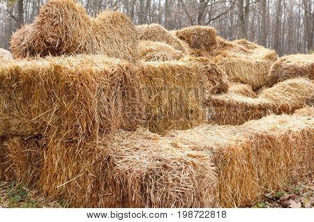 Bricks of fresh hay on a manege for horse dressage Crop for livestock