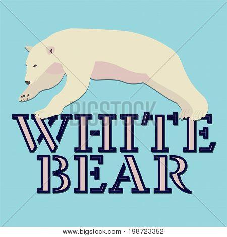 Polar white bear logo design. Vector illustration.