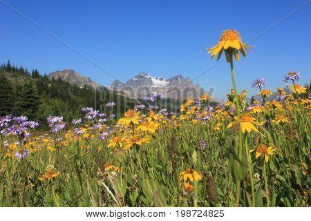 Fields of Elysium Pass, Jasper National Park.