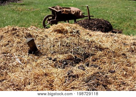 Large Pile Of Straw And Manure With Wooden Wheelbarrow