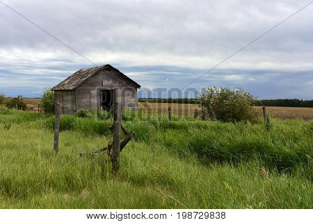 An image of an old run down granary in the middle of a tall hay field.