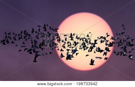 Group of birds migration over the sunset