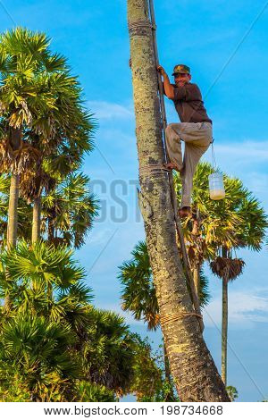 KAMPOT, CAMBODIA - DECEMBER 28: Man (unidentified) smiles while climbing up a ladder fixed on a palm tree to toddy palm (Borassus flabellifer) juice on December 28, 2016 in Kampot, Cambodia.