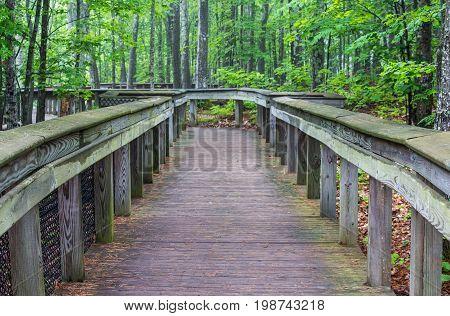 A boardwalk through the forest, still wet after a rain.