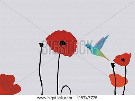 vector illustration of poppies floral background with hummingbirds