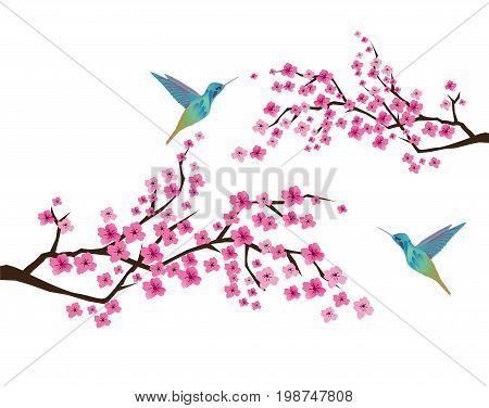 vector illustration of cherry blossom with hummingbirds