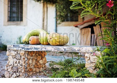 Autumn harvest colorful squashes and pumpkins in courtyard