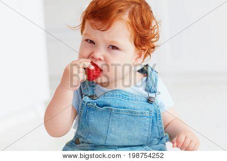 cute ginger toddler baby tasting fresh strawberries