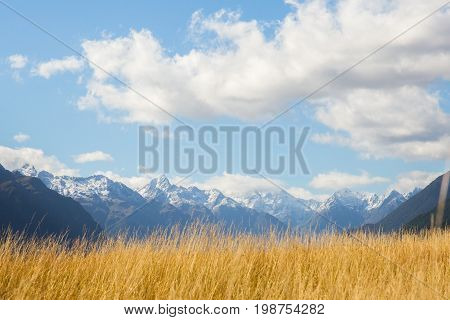 yellow grassland and snow mountian with the clouds, newzealand