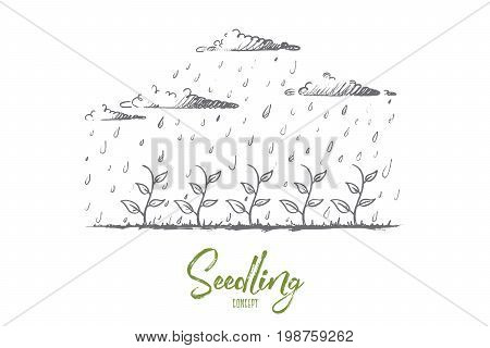 Seedling concept. Hand drawn young plant watered by rain. Seedling growth isolated vector illustration.