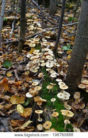 Mushroom In A Forest Glade