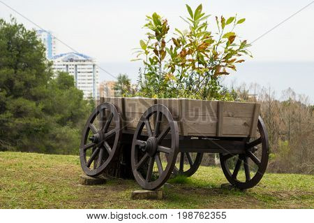 A cart with flowers on a hillock.