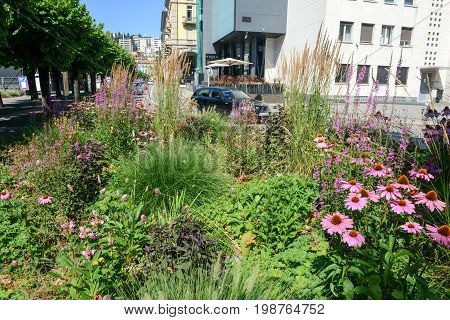 Lugano Switzerland - 9 july 2016: people driving their cars in front of nicely decorated flower bed and trimmed bushes at Lugano on the italian part of Switzerland.