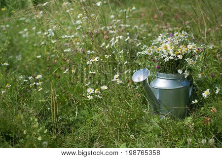 Closeup of metal watering can used as a vase for wild summer flowers. metal watering can on the grass in the garden on a sunny day.