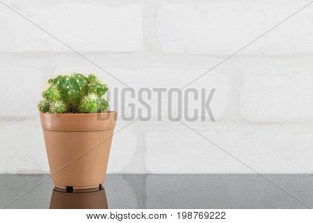 Closeup fresh green cactus in brown plastic pot for decorate on black glass table and white brick wall textured background with copy space