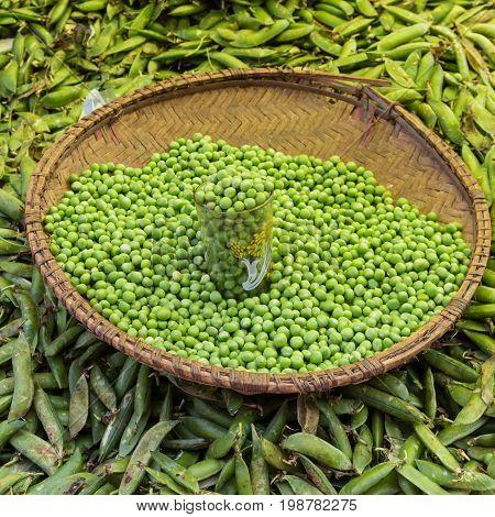 Green peas, Pisum sativum, being sold at the local food market.