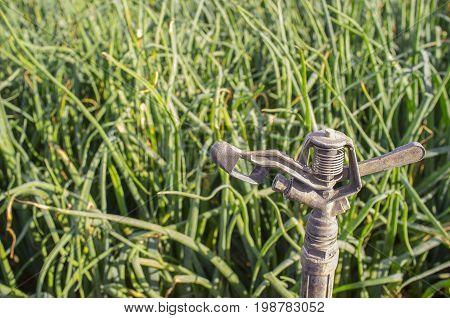 Sprinkler at onions field. Guadiana meadows Badajoz Spain