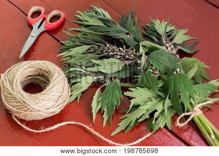 Binding of motherwort (Leonurus cardiaca) in bundles for drying. Harvesting medicinal plants. Used in herbal medicine it is valuable honey plant Motherwort scissors and twine on brown wooden table