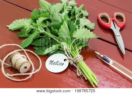 Bundle of melissa officinalis with label and inscription pen scissors and twine reel on old brown wooden table