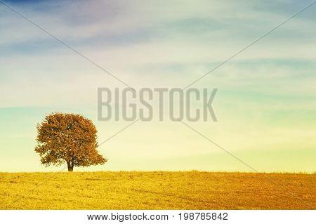 Single tree on meadow full of flowers in autumn landscape under blue sky