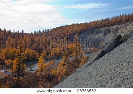 Siberian larch taiga in autumn in the North of Evenkia. Krasnoyarsk region Russia